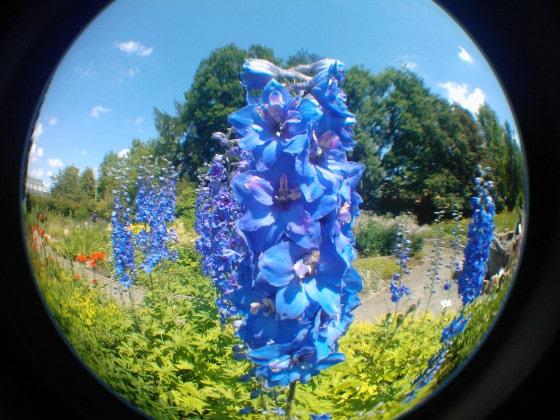 Blumen_Fisheye