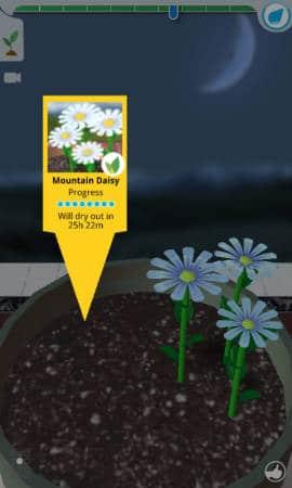 Flower_Garden_Daisy