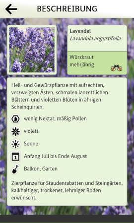 Bienen_App_Pflanzen