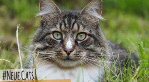 Neue_Cats_fuer_Android_iOS_WindowsPhone