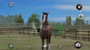 My Horse_Foto