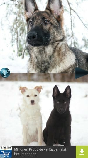 Petsie Hunde voting