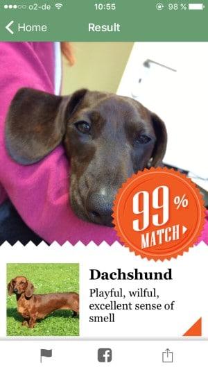 fetch_App_Dackel