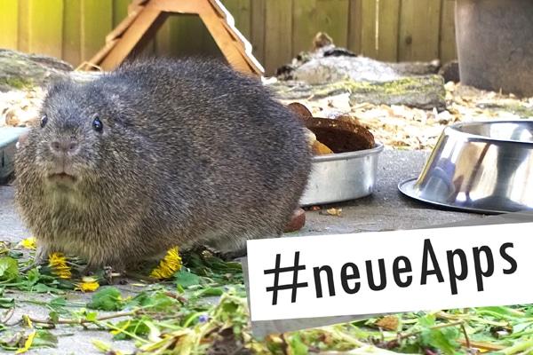 neueApps_Wildmeerschwein_Check_App