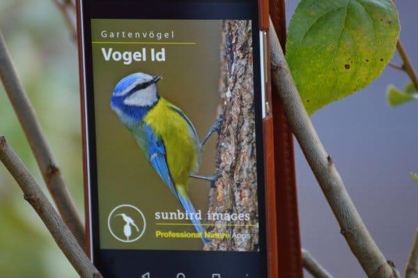 Vogel_ID_Beitragsbild