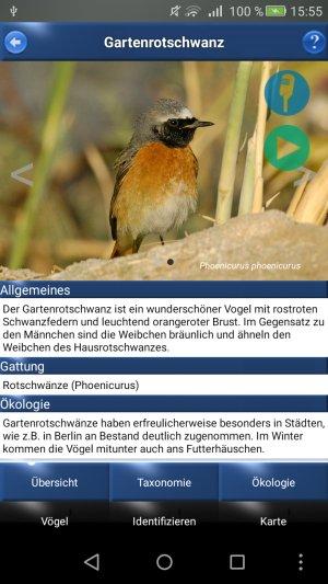 Vogel_ID_Gartenrotschwanz_Details